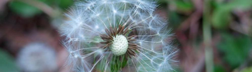 Homeopaticky